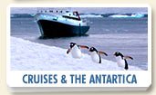Cruises, Antartica, and Glaciers